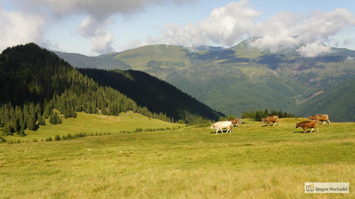 Góry Marmaroskie, Karpaty Marmaroskie - trekking