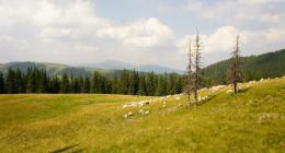 Góry Karpaty Marmaroskie - Trekking, Wędrówka