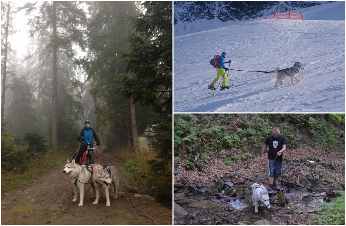 Jałowcówka - dogtrekking, bikejoring, dogtouring, canicross