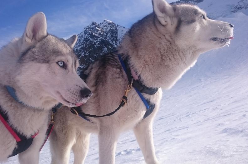 Syberian husky - Jałowcówka, Koszarawa - dogtouring, dogtrekking