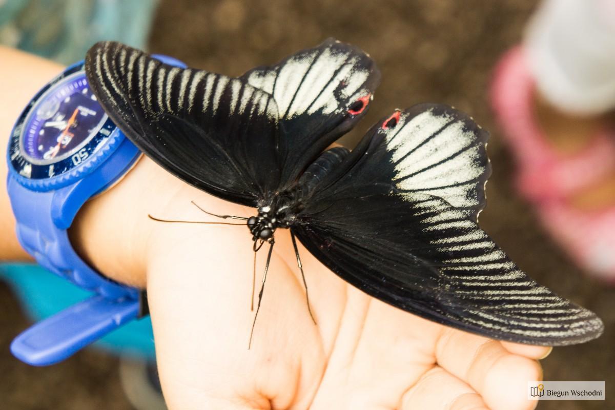 Atrakcje Wiednia – Schmetterlinghaus Czyli Motylarnia
