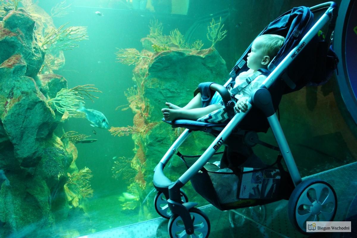 Atrakcje Wiednia. Haus Des Meeres – Oceanarium W Niemieckiej Wieży Przeciwlotniczej