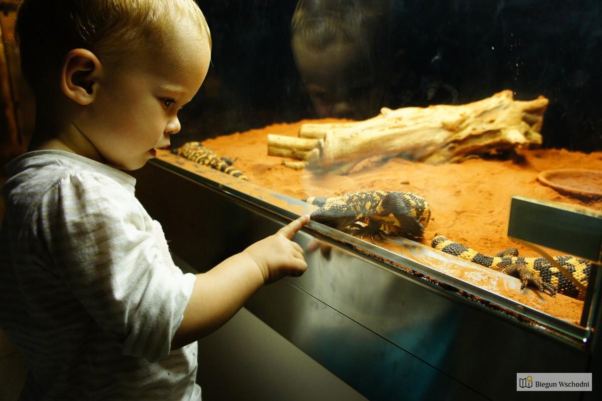 Atrakcje Wiednia dla dzieci. Oceanarium Haus des Meeres, Wiedeń z dzieckiem