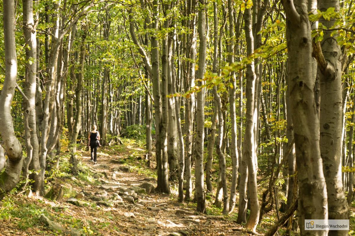 Cisna Jasło - szlak w Bieszczadach, gdzie nie ma tłumów