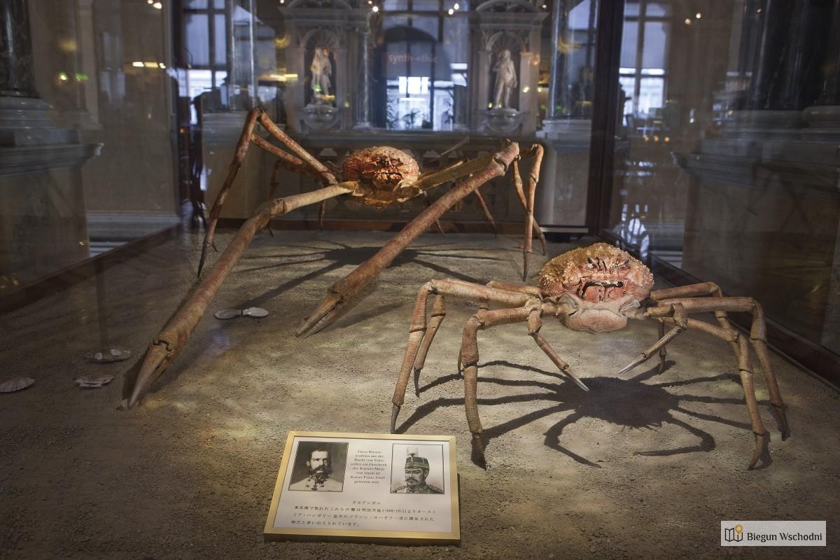 Atrakcje dla dzieci we Wiedniu - Muzeum Historii Naturalnej
