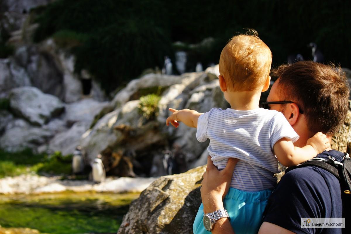 Wiedeń z dziećmi. Atrakcje Wiednia - ZOO Schonbrunn