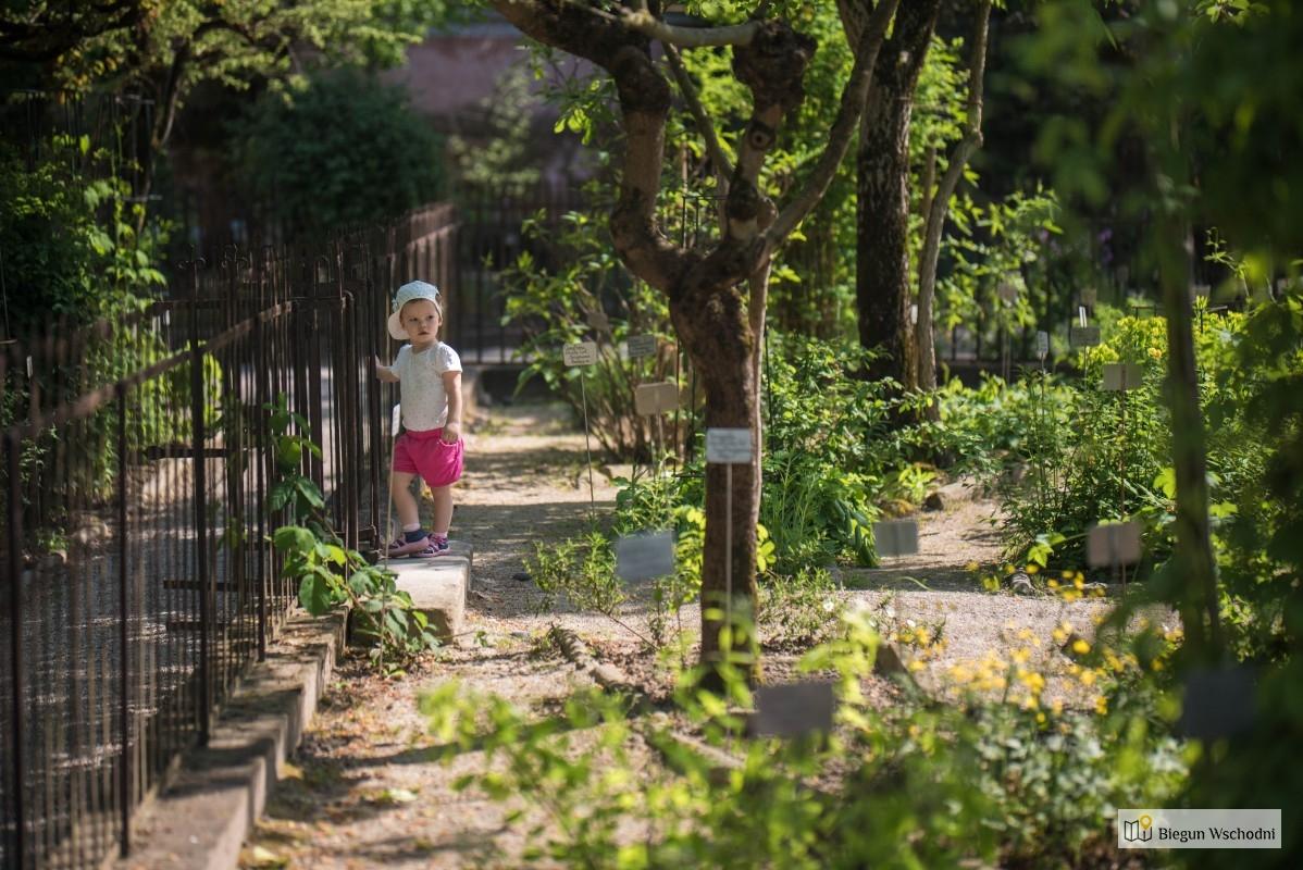 Ogród botaniczny w Padwie - atrakcje, co warto zobaczyć